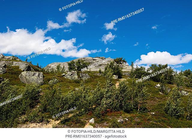 Summer landscape, Leirdalen, Norway, July 2016 / Sommerlandschaft, Leirdalen, Norwegen, Juli 2016