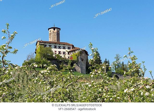 Italy, Trentino Alto Adige, Non valley, apple flowering at Valer castle