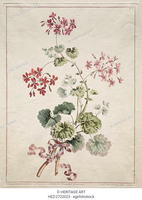 A Collection of Flowers Drawn from Nature: No. 6 - Scarlet and Variegated Geranium, 1801. Creator: John Edwards (British)