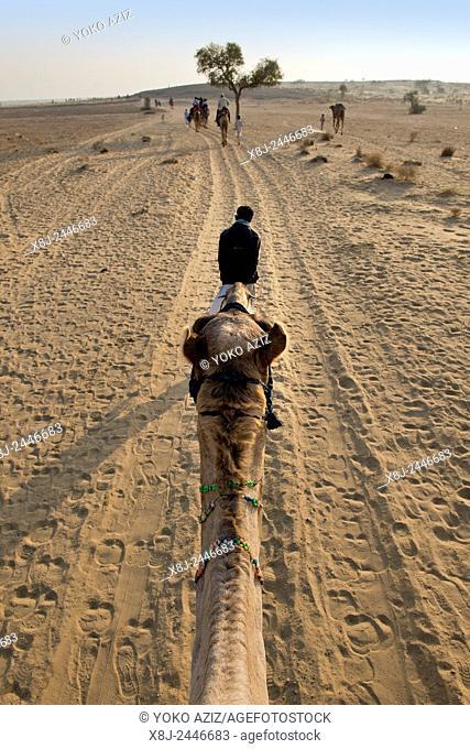 India, Rajasthan, Jaisalmer, camel ride desert