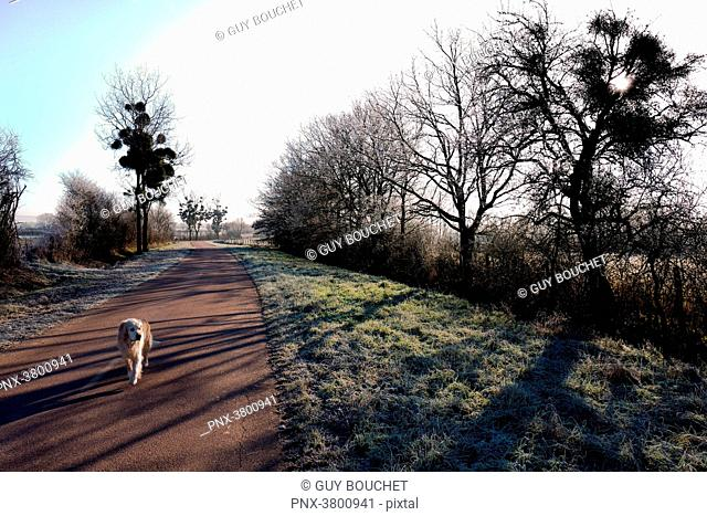 Europe, France, Burgundy, Cote-d'Or, Bard les Epoisses, B-road with a dog