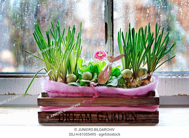 Rain on a window. In the foreground a wooden box with Easter eggs, Easter bunny and flowering Daisy. Germany