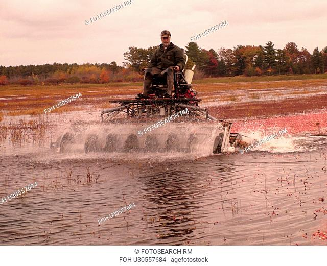 East Wareham, MA, Massachusetts, Plymouth County, Cranberries, Cranberry Wet Harvest, water reels
