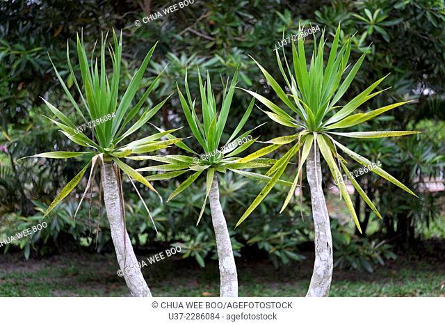 Trees. Image taken at orchid garden, Kuching, Sarawak, Malaysia