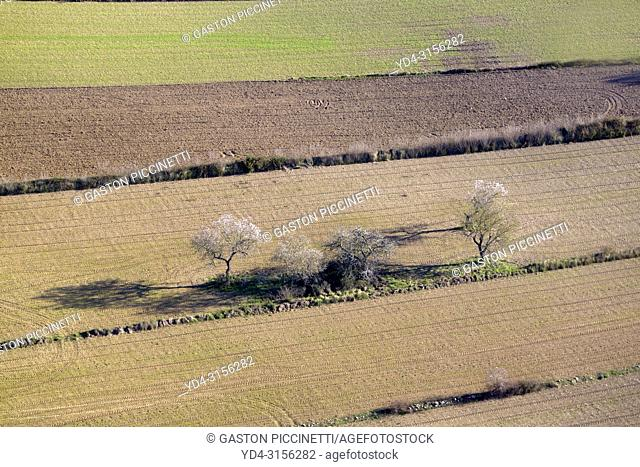 Aerial view of trees in the land, Mallorca lands, Balearic Island, Spain