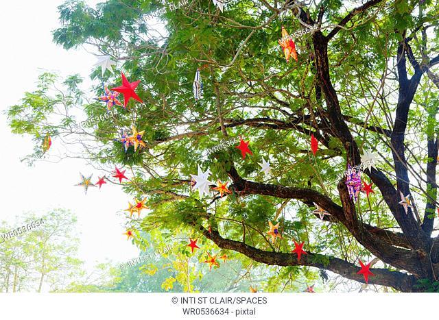 Decorative Stars in a Tree
