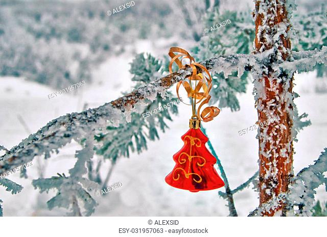 Christmas decoration on pine live in the woods