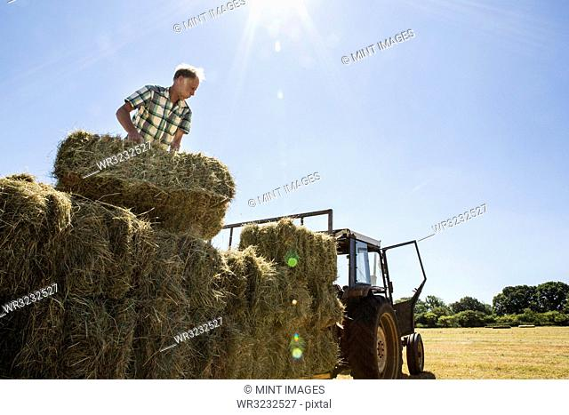 Farmer stacking hay bales on a trailer