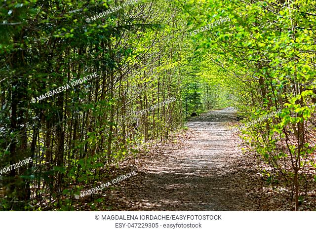 Path deep forest in spring time
