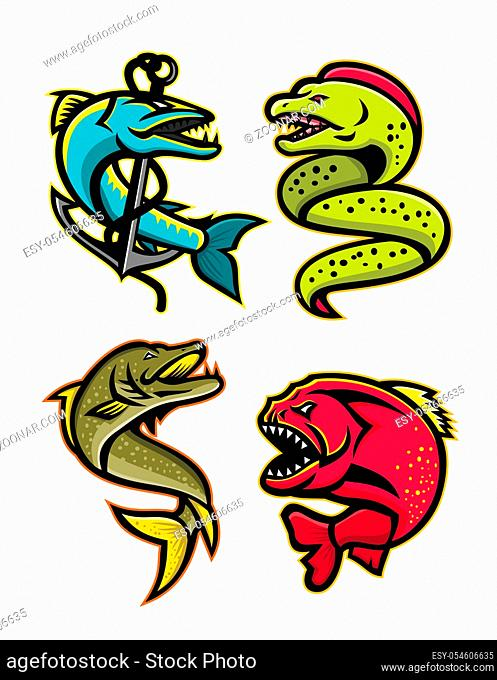 Mascot icon illustration set of ferocious and fearsome fishes like the barracuda, moray eel, northern pike or muskellunge fish, the piranha