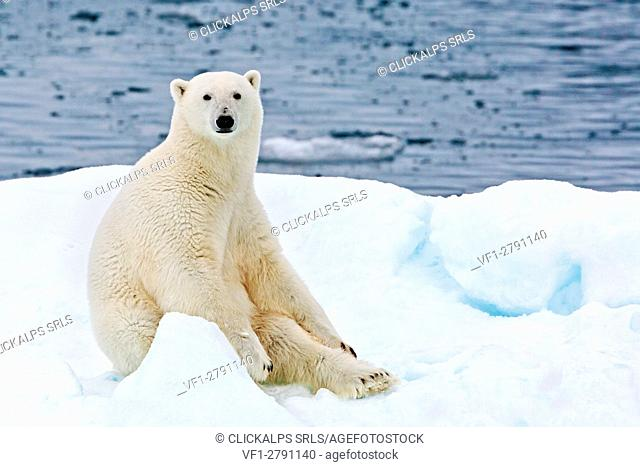 A polar bear sitting on a floating iceberg in the Arctic Ocean