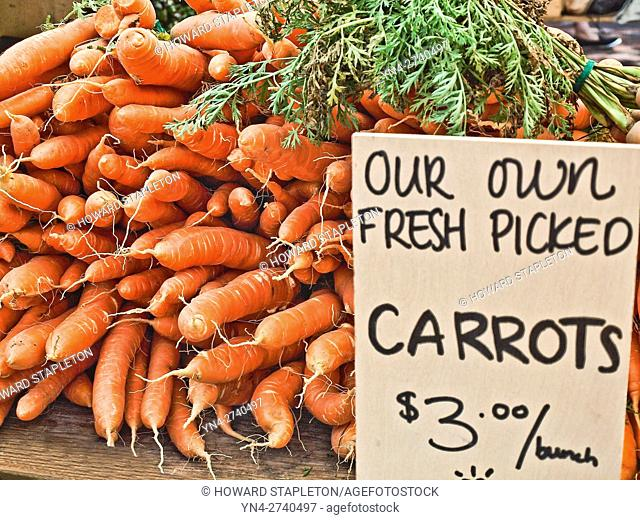 Carrots at the farmer's market at Copley Square. Boston, Massachusetts