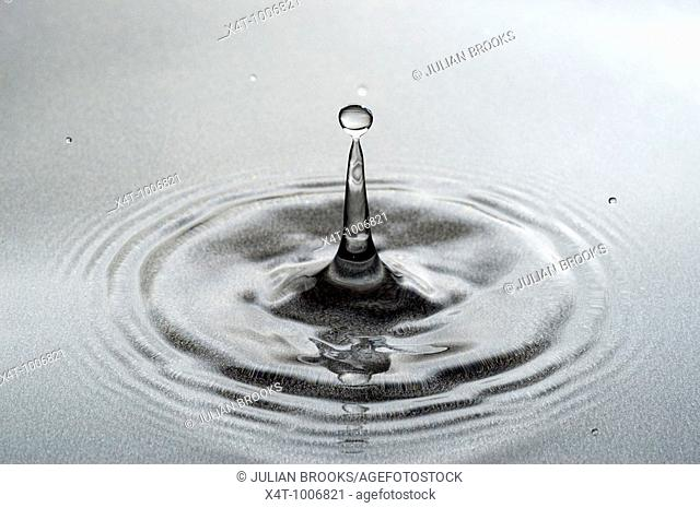 A drop of water falling into a pool forming a classic column with drops  Close up