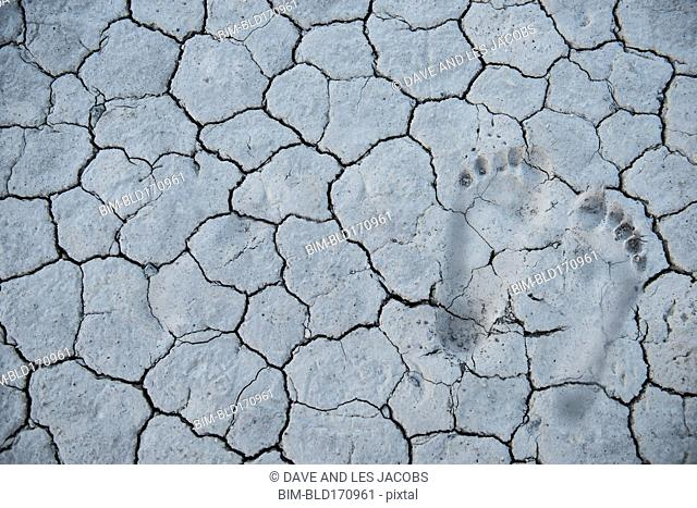 Footprints in cracked dry desert earth