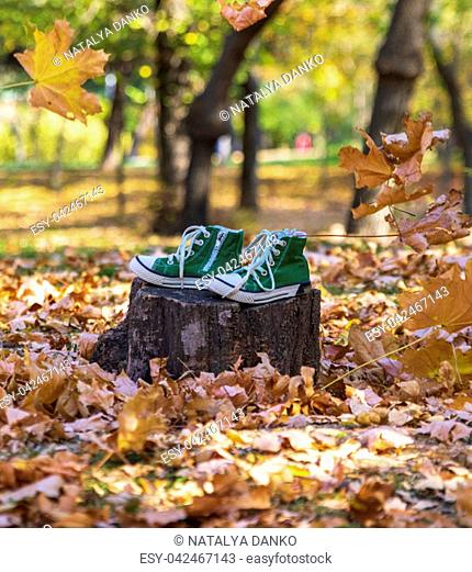 pair of old green gym shoes stand on a stump in a park on an autumn afternoon