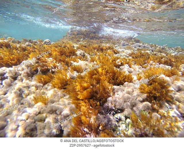 Underwater image in Las Rotas beach Natural park in Denia Alicante Spain
