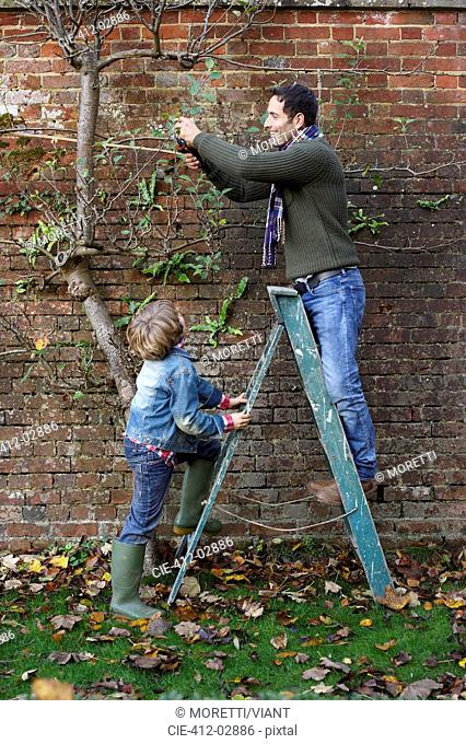 Father and son working in garden