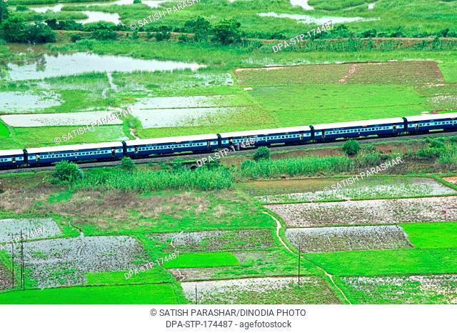 Konkan railway passing through paddy rice field , Chiplun , Ratnagiri , Maharashtra , India