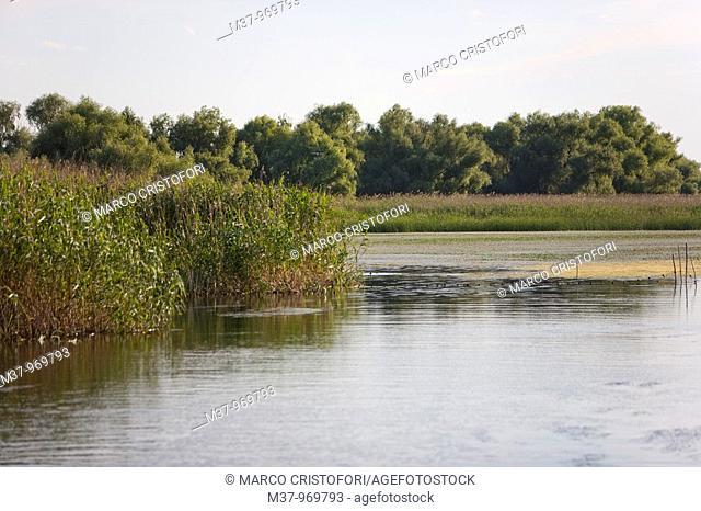 Danube river delta  Romania