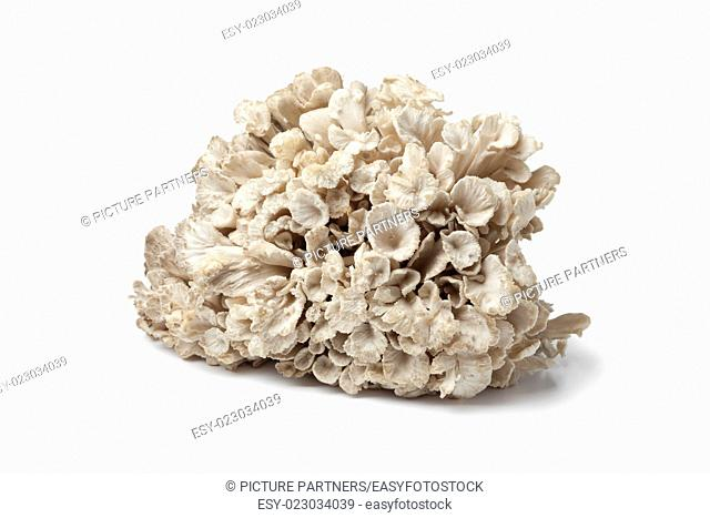 Fresh raw hen-of-the-woods on white background