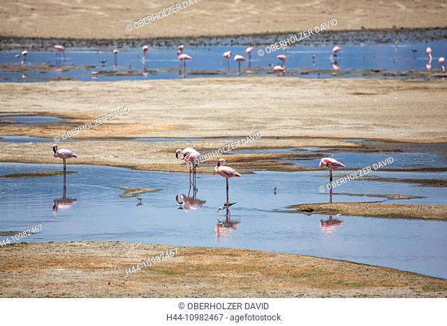flamingos on Lake Manyara in Tanzania