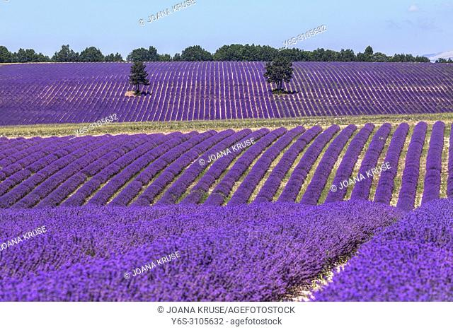 Ferrassieres, Drome, Provence, France