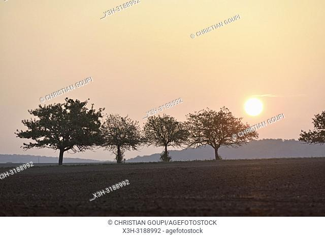 pommiers dans un champ au coucher du soleil, departement d'Eure-et-Loir, region Centre-Val de Loire, France, Europe/apple trees in a field at sunset
