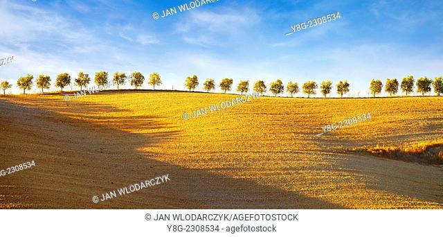 Tuscany landscape, Val d'Orcia, Tuscany, Italy
