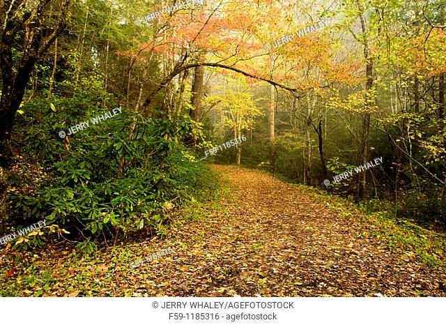 Autumn, Trail, Great Smoky Mountains National Park, TN