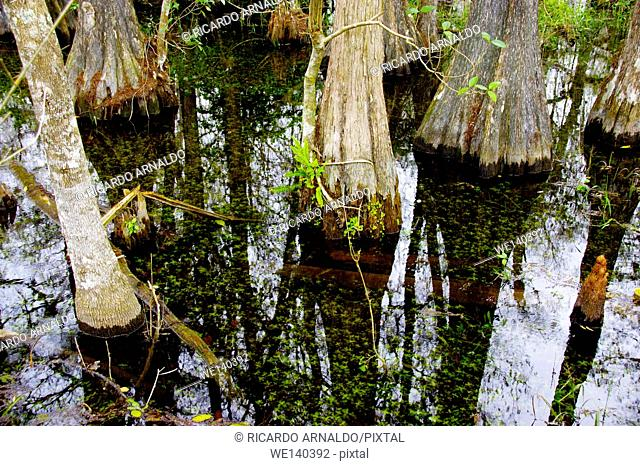 Details of Big Cypress Swamp Preserve