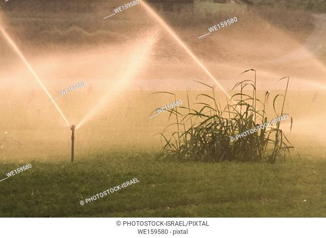 field irrigation with water sprinklers Photographed in Beit Shean Valley, Israel