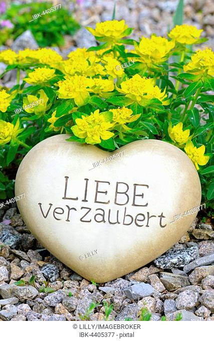 Heart of stone with the inscription Liebe verzaubert, in front of Stained spurge (Euphorbia epithymoides)