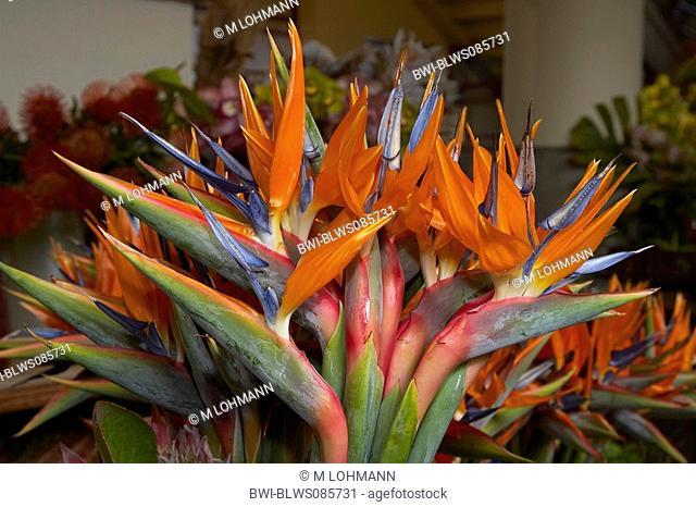 crane flower, bird of paradise flower, geel piesang Strelitzia reginae, at the fruit market, Portugal, Madeira, Funchal