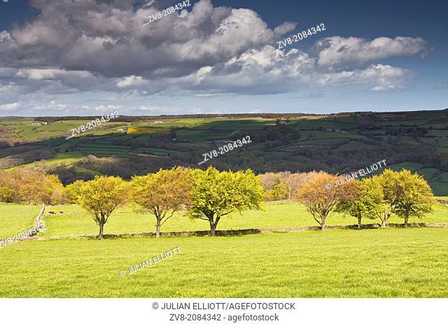 North York Moors scenery near to Grosmont