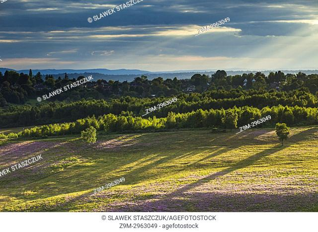 Summer evening in Ashdown Forest, East Sussex, England