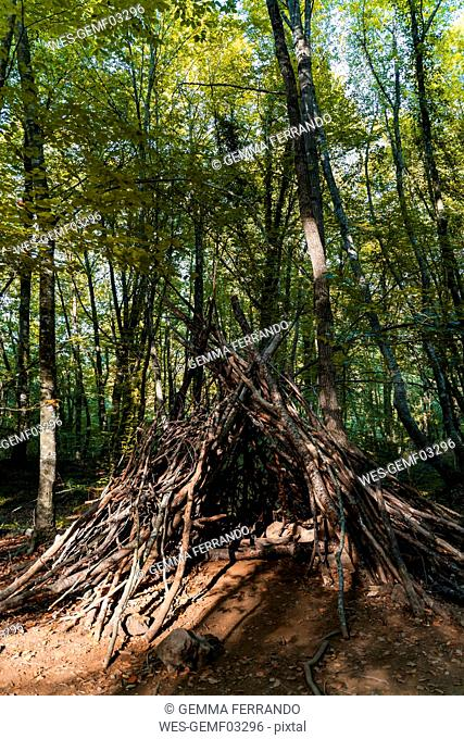 Refuge made of branches in a beech forest