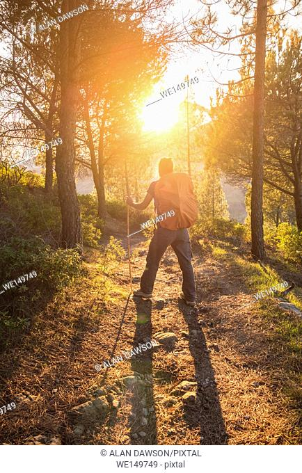 Female hiker in Pine forest at sunrise in mountains of Gran Canaria, Canary Islands, Spain