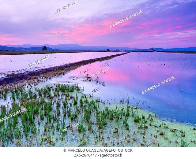 Flooded rice fields after harvest at dusk. Ebro River Delta Natural Park, Tarragona province, Catalonia, Spain