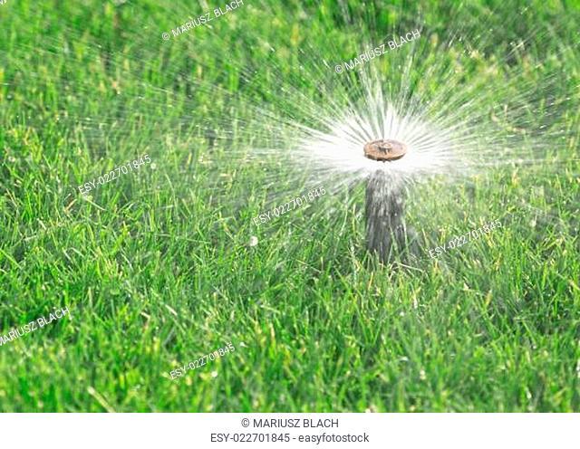 sprinkler watering fresh lawn