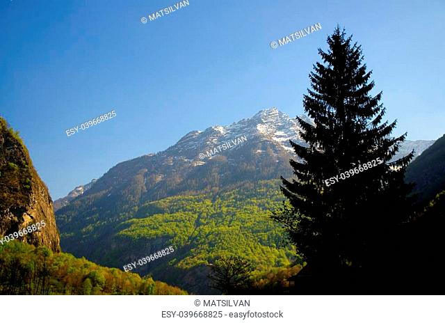 Tree and snow-capped mountain with blue sky