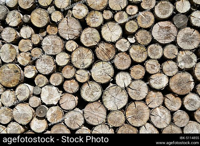 Spruces (Picea), stacked logs, background image, North Rhine-Westphalia, Germany, Europe