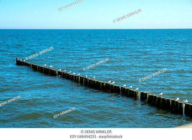 the Baltic Sea, seagulls and waves