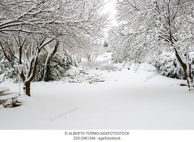 Snow-covered garden in winter