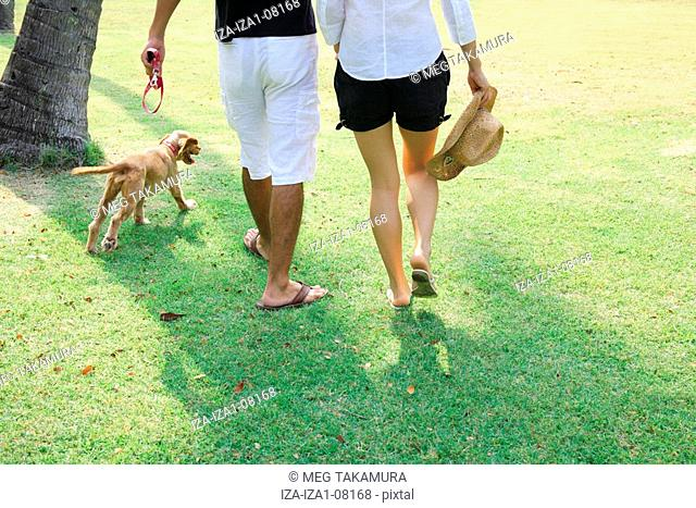 Rear view of a young woman walking and a mid adult man in a park with a dog