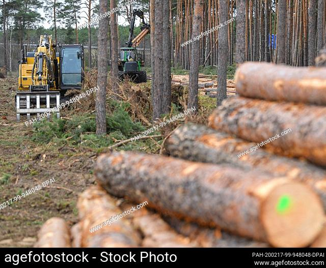 17 February 2020, Brandenburg, Grünheide: Pine logs are located along a construction road on the future site of the Tesla Gigafactory