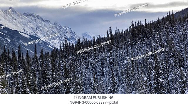 Snow covered trees with mountain in the background, Maligne Lake, Highway 16, Yellowhead Highway, Jasper, Jasper National Park, Alberta, Canada