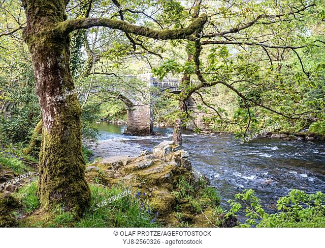 Riverside oak forest at the Dartmoor National Park, Devon, England, UK