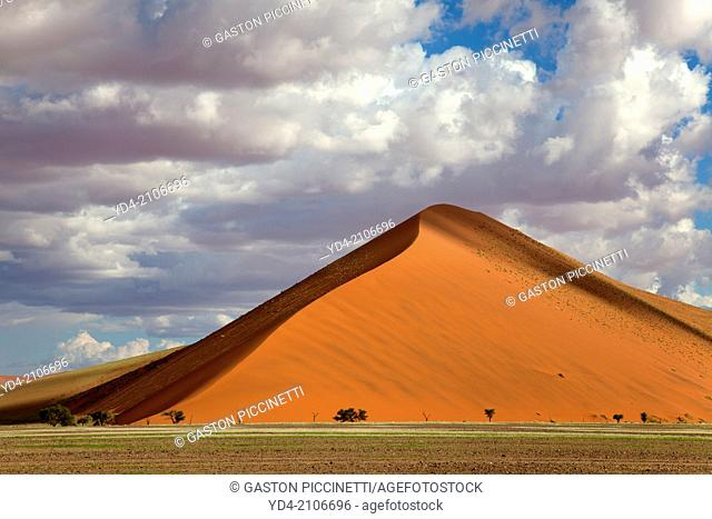 Beautifull colours in the desert after the rain, Namib-Naukluft National Park, namib desert, Namibia