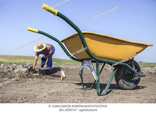 Specialized worker on archaeological excavation. Yellow wheelbarrow