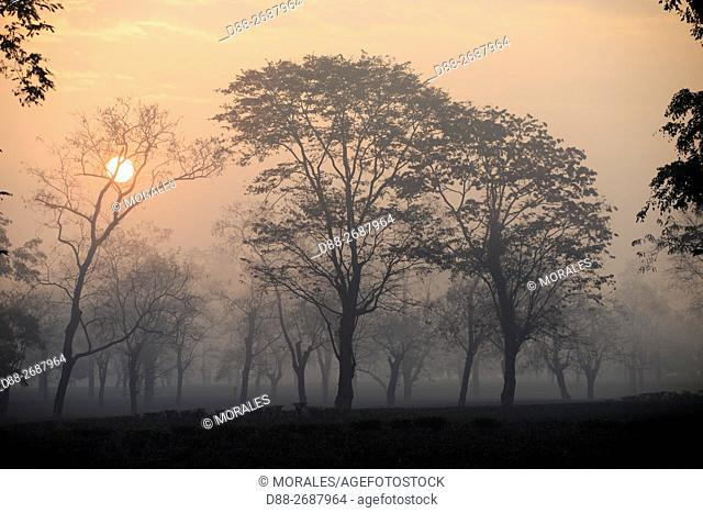South east Asia, India,Tripura state,Gumti wildlife sanctuary,sunrise